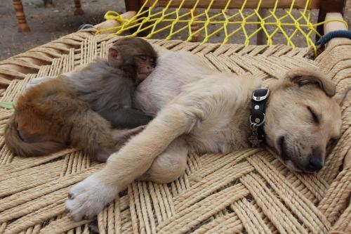 doggysleeping
